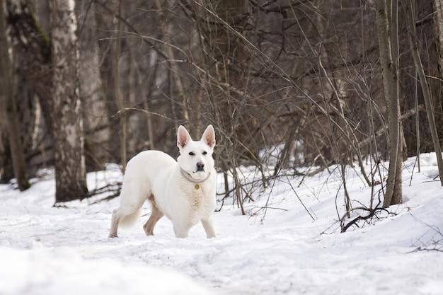 森の中の犬