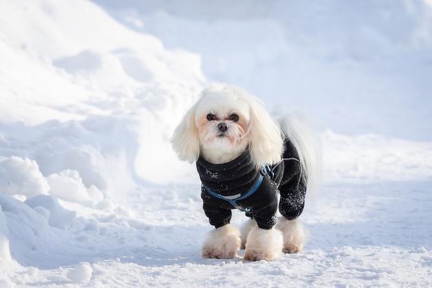 Собака снег зимой
