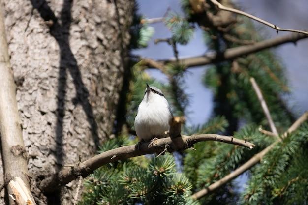 Поползень сидит на дереве в парке