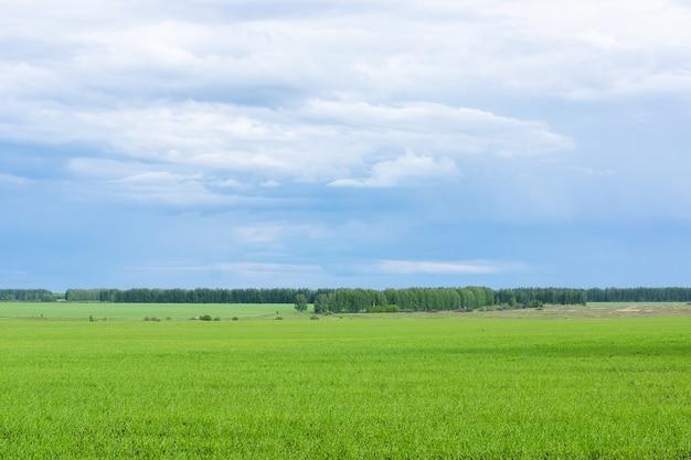 フィールドとバーチグローブの風景