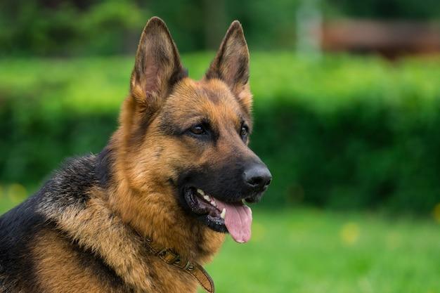 草の上の犬