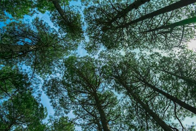 スペインの背の高い山の木