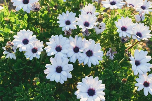 公園や庭の夕暮れの花のグループ