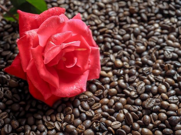 Цветущая красная роза на поверхности кофейного зерна.