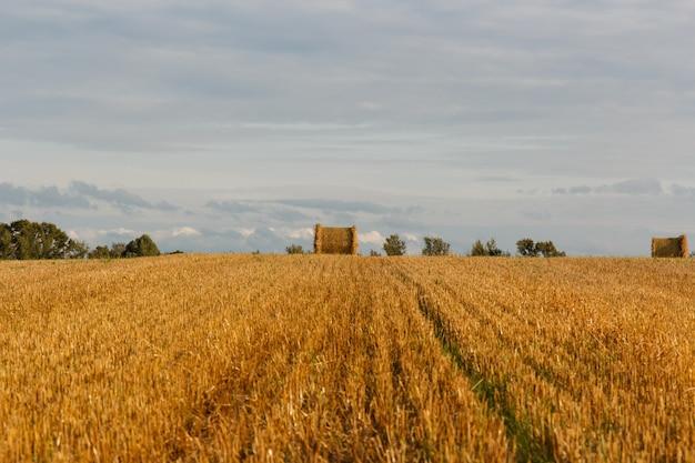 収穫後の干し草の山と黄色のフィールド