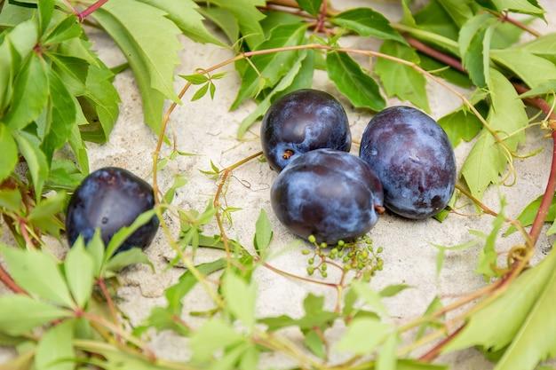 Слива и листья дикого винограда, конкретный фон.