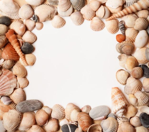 テキスト用のスペースと海の貝殻の背景。平方。