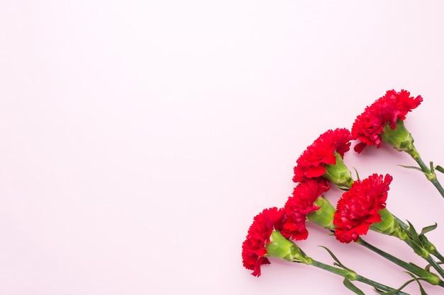 コピースペースとピンクの背景に赤いカーネーション。母の日カード、バレンタインデー。