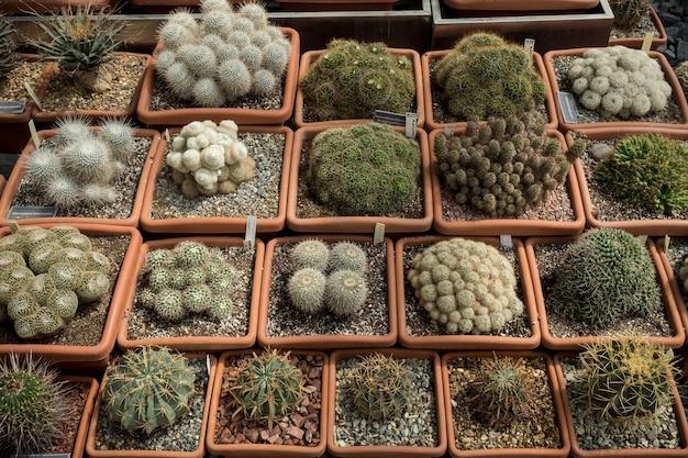 様々な商品緑のサボテンと多肉植物の鍋栽培