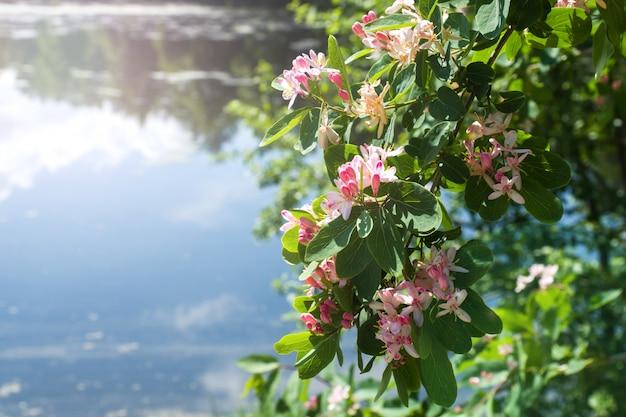 Маленькие светло-розовые цветы и бутоны на кустах на берегу реки