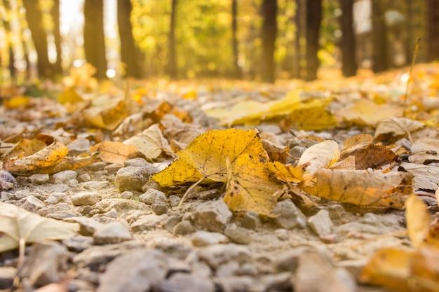 穏やかな日光の下で黄色の葉を持つ秋の森