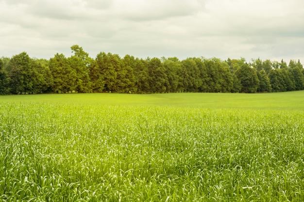 Красивый утренний свет в общественном парке с зеленой травой поле и дерево