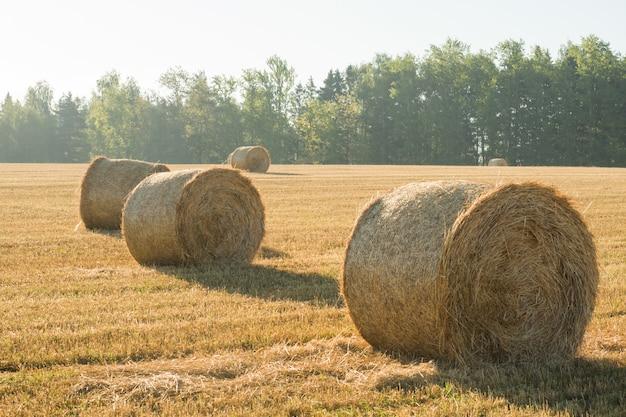 干し草の山の美しい夏の農場風景。農業のコンセプト