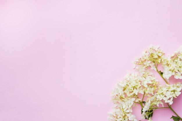 コピースペースと繊細なピンクの白いアジサイの花。