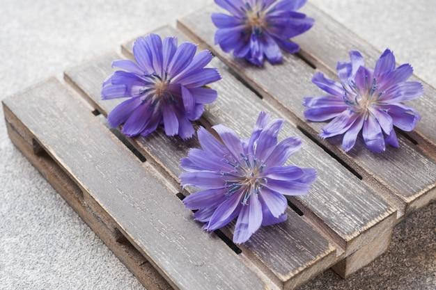 灰色のテーブルの上の青いチコリの花。閉じる。