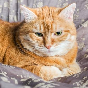 毛布で休んで横になっている赤い猫