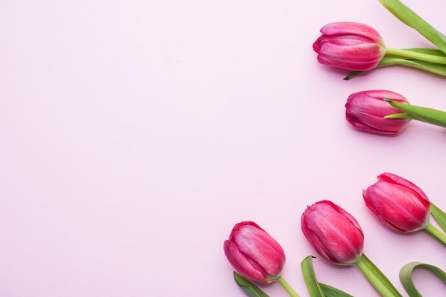 コピースペースとピンクの背景に紫の明るいチューリップ。