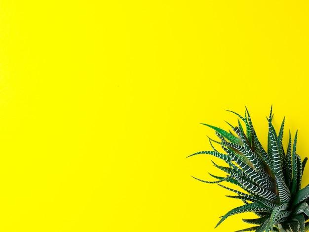 Зеленый кактус на ярко-желтом фоне. креативная минимальная концепция