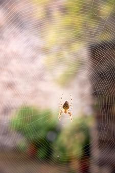 狩りを待っているクモの巣の中心にあるクモ