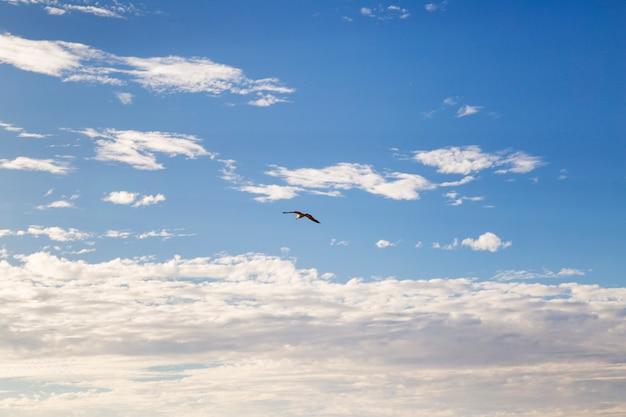 Чайка летит по небу