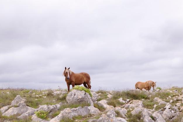 緑の野原で茶色の馬