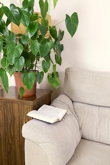 Книга на верхушке дивана