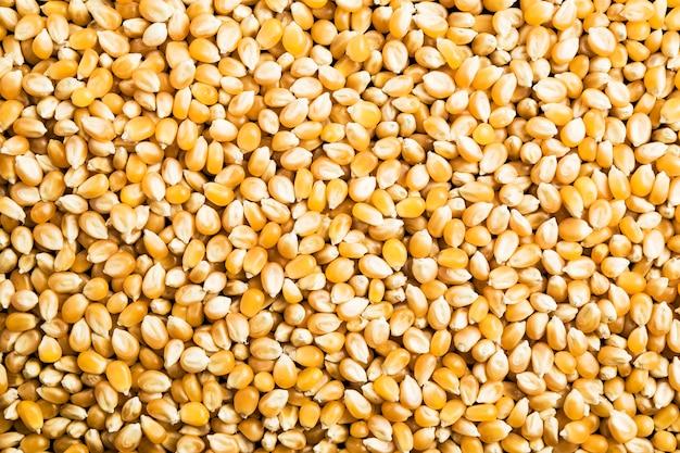 市場や雑誌でポスターとして使用する生のトウモロコシ穀物の背景