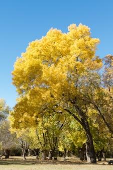 秋の到来により黄ばむいくつかの木