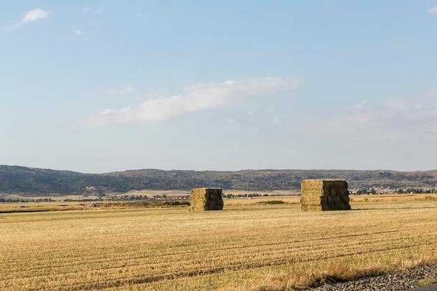 耕作地の風景