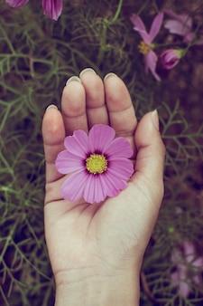 Розовый цветок расцветает в поле расцветает в саду