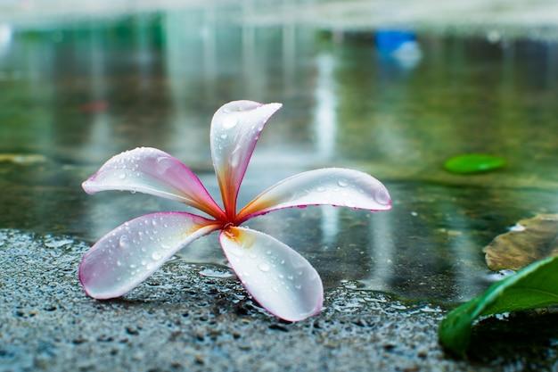 Цветок расцветает в поле расцветает в саду