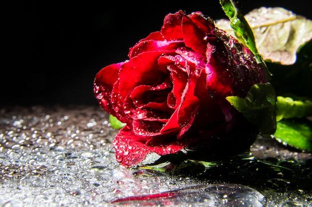 Красные розы фон винтаж