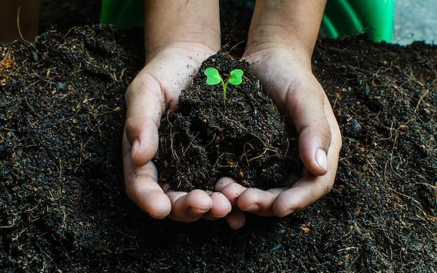 苗の成長を植える方法、