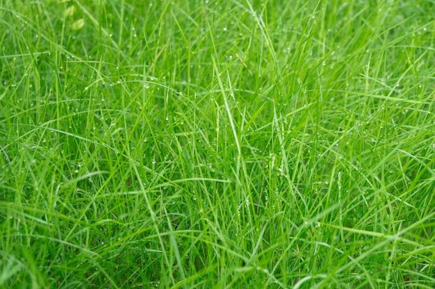 Фон из капель росы на зеленой траве