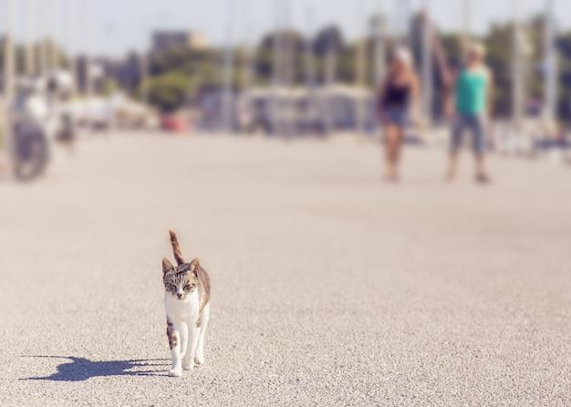 Кошка гуляет по дороге, размытые люди на заднем плане
