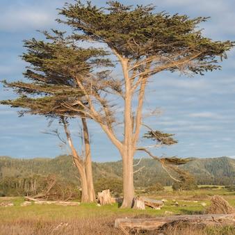 前景にトランクを持つ雲と空と二人だけの巨大な木