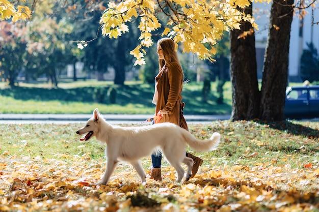 女の子は若い白いスイス・シェパード・ドッグと秋の公園で散歩します。