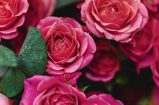 シンプルな背景にバラの茂みのバケツ