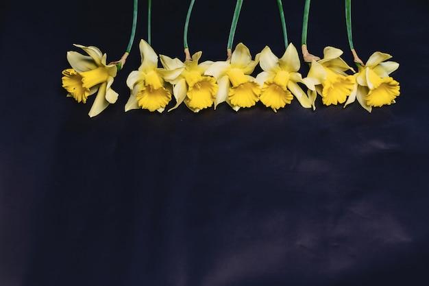 暗い背景に黄色の水仙の花