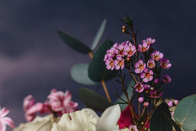 Цветок хамелавки на простом фоне