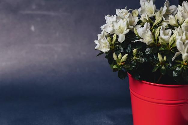 暗い背景上の花瓶にアジサイ