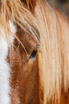 馬は田舎でクローズアップ