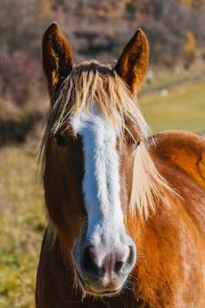 山の中の馬