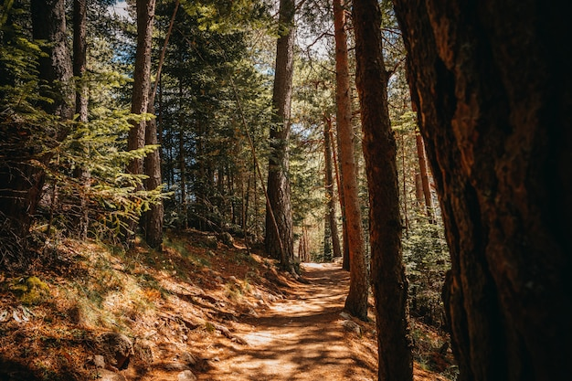秋の森の中の道
