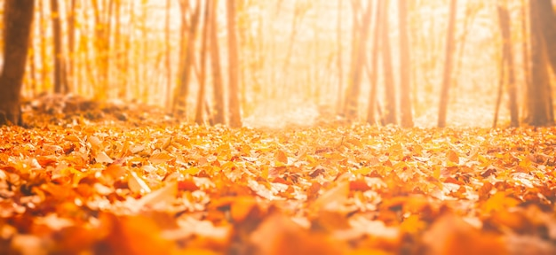 秋の森の乾燥葉
