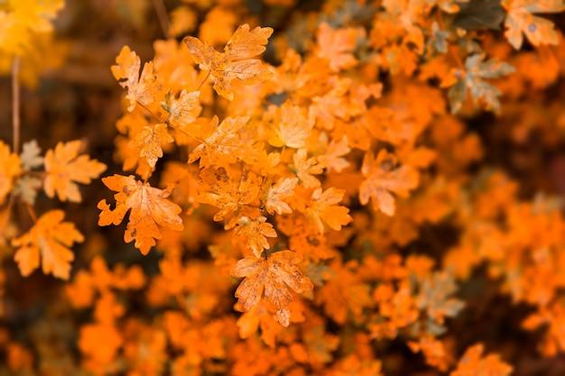 秋の森の乾燥した葉