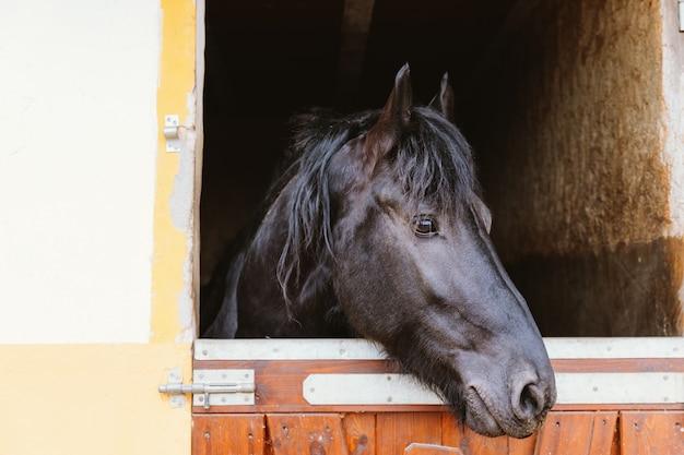 馬小屋で馬の頭