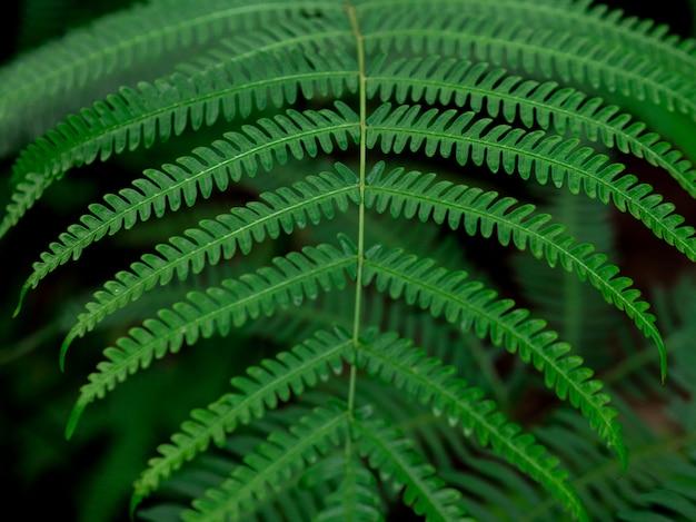 緑の葉の質感。緑の自然の背景。