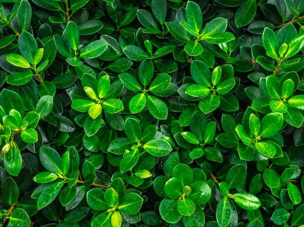 緑の葉の質感