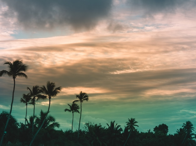Природа пейзаж тропический фон праздник путешествия дизайн